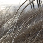 Ice on dune grass
